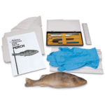 "Nasco's ""Try It"" Dissection Kit – Perch Kit to Explore the Internal and External Anatomy"