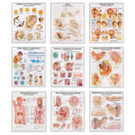 Sex Education Charts Set of 9 Wall Charts includes Male and Female Reproductive Organs